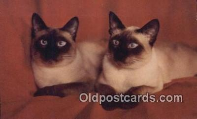 cat001914 - Chrome Cat Postcard, Post Card, Postales, Postkaarten, Kartpostal, Cartes, Postale, Postkarte, Ansichtskarte