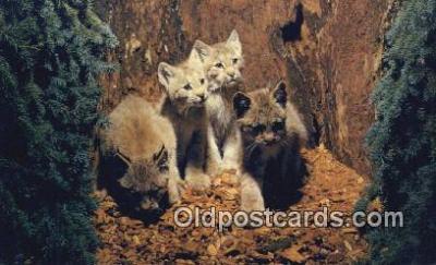 cat001919 - Chrome Cat Postcard, Post Card, Postales, Postkaarten, Kartpostal, Cartes, Postale, Postkarte, Ansichtskarte