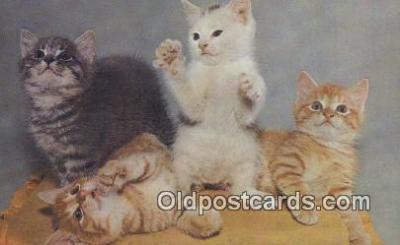 cat001922 - Chrome Cat Postcard, Post Card, Postales, Postkaarten, Kartpostal, Cartes, Postale, Postkarte, Ansichtskarte