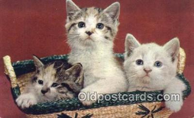 cat001930 - Chrome Cat Postcard, Post Card, Postales, Postkaarten, Kartpostal, Cartes, Postale, Postkarte, Ansichtskarte