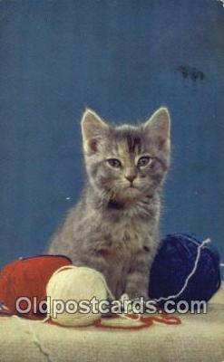 cat001939 - Chrome Cat Postcard, Post Card, Postales, Postkaarten, Kartpostal, Cartes, Postale, Postkarte, Ansichtskarte