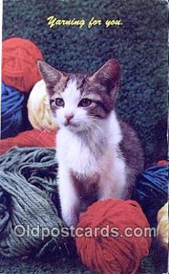 cat001957 - Chrome Cat Postcard, Post Card, Postales, Postkaarten, Kartpostal, Cartes, Postale, Postkarte, Ansichtskarte