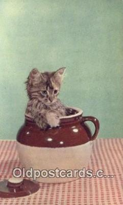 cat001963 - Chrome Cat Postcard, Post Card, Postales, Postkaarten, Kartpostal, Cartes, Postale, Postkarte, Ansichtskarte