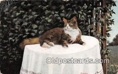 cat002006 - Postcard Post Card