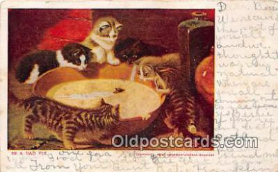 cat002020 - American Journal Examiner Postcard Post Card