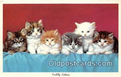 cat002021 - Kuddly Kittens  Postcard Post Card