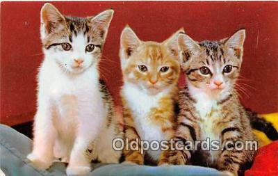 cat002022 - Three Little Kittens  Postcard Post Card
