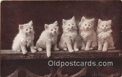 cat002047 - Postcard Post Card