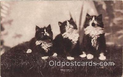 cat002050 - Looking for Mars CE Bullard Postcard Post Card