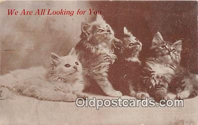 cat002052 - Postcard Post Card