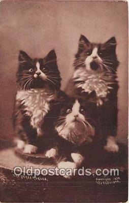 cat002094 - Three Rogues CE Bullard Postcard Post Card