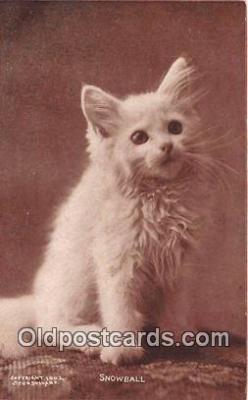 cat002096 - Snowball CE Bullard Postcard Post Card