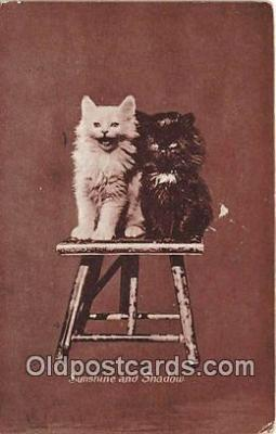 cat002097 - Sunshine & Shadow  Postcard Post Card