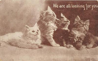 cat002110 - Cat Post Card Old Vintage Antique