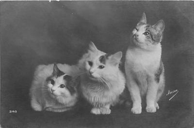 cat002114 - Cat Post Card Old Vintage Antique