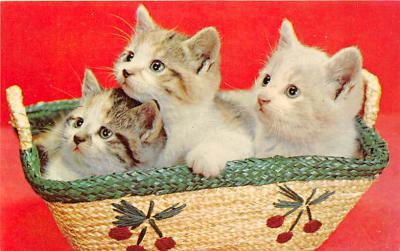 cat002116 - Cat Post Card Old Vintage Antique