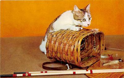 cat002121 - Cat Post Card Old Vintage Antique