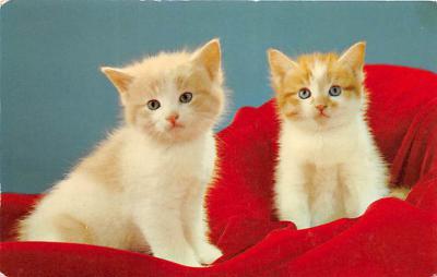 cat002132 - Cat Post Card Old Vintage Antique