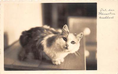 cat002139 - Cat Post Card Old Vintage Antique