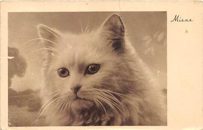 cat002148 - Cat Post Card Old Vintage Antique