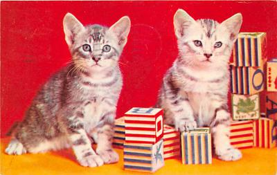 cat002161 - Cat Post Card Old Vintage Antique