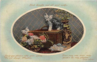 cat002162 - Cat Post Card Old Vintage Antique