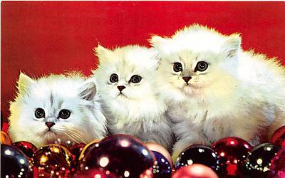 cat002167 - Cat Post Card Old Vintage Antique