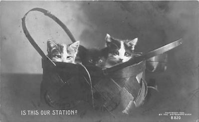 cat002170 - Cat Post Card Old Vintage Antique