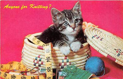 cat002177 - Cat Post Card Old Vintage Antique