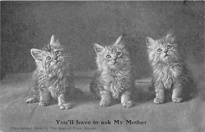 cat002180 - Cat Post Card Old Vintage Antique