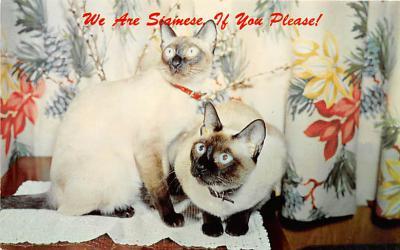 cat002185 - Cat Post Card Old Vintage Antique
