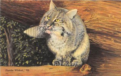 cat002186 - Cat Post Card Old Vintage Antique
