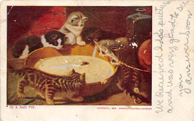 cat002188 - Cat Post Card Old Vintage Antique