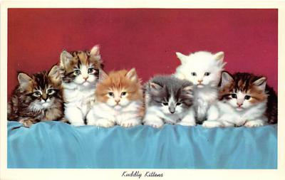 cat002190 - Cat Post Card Old Vintage Antique