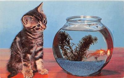 cat002194 - Cat Post Card Old Vintage Antique
