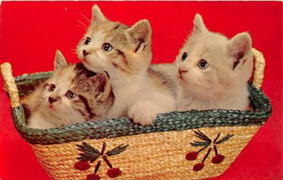 cat002195 - Cat Post Card Old Vintage Antique