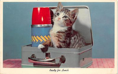 cat002203 - Cat Post Card Old Vintage Antique