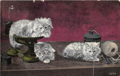 cat002207 - Cat Post Card Old Vintage Antique