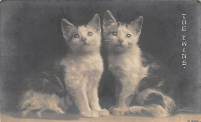 cat002209 - Cat Post Card Old Vintage Antique
