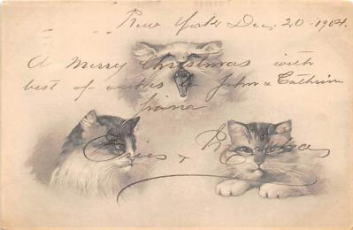 cat002214 - Cat Post Card Old Vintage Antique