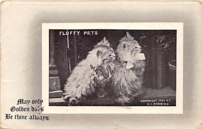 cat002223 - Cat Post Card Old Vintage Antique