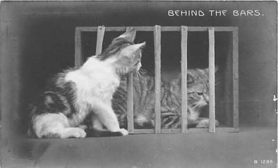 cat002224 - Cat Post Card Old Vintage Antique