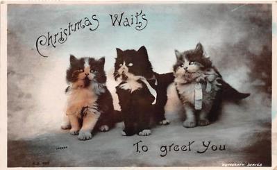 cat002225 - Cat Post Card Old Vintage Antique