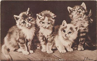 cat002234 - Cat Post Card Old Vintage Antique