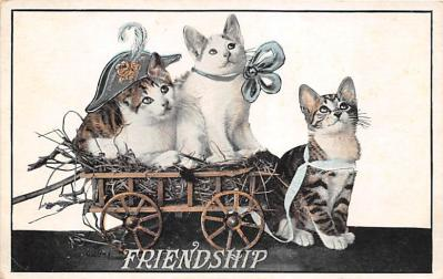 cat002235 - Cat Post Card Old Vintage Antique