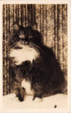 cat002239 - Cat Post Card Old Vintage Antique