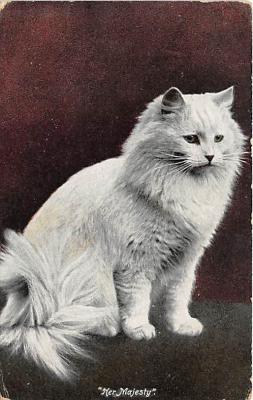 cat002242 - Cat Post Card Old Vintage Antique