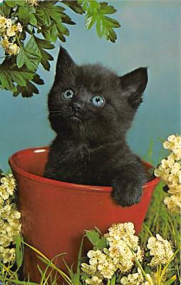 cat002250 - Cat Post Card Old Vintage Antique