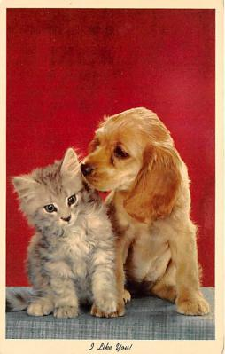 cat002251 - Cat Post Card Old Vintage Antique