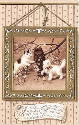 cat002253 - Cat Post Card Old Vintage Antique